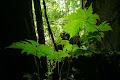 Ferns in Tree Cave entrance | photo © Matt Kirby