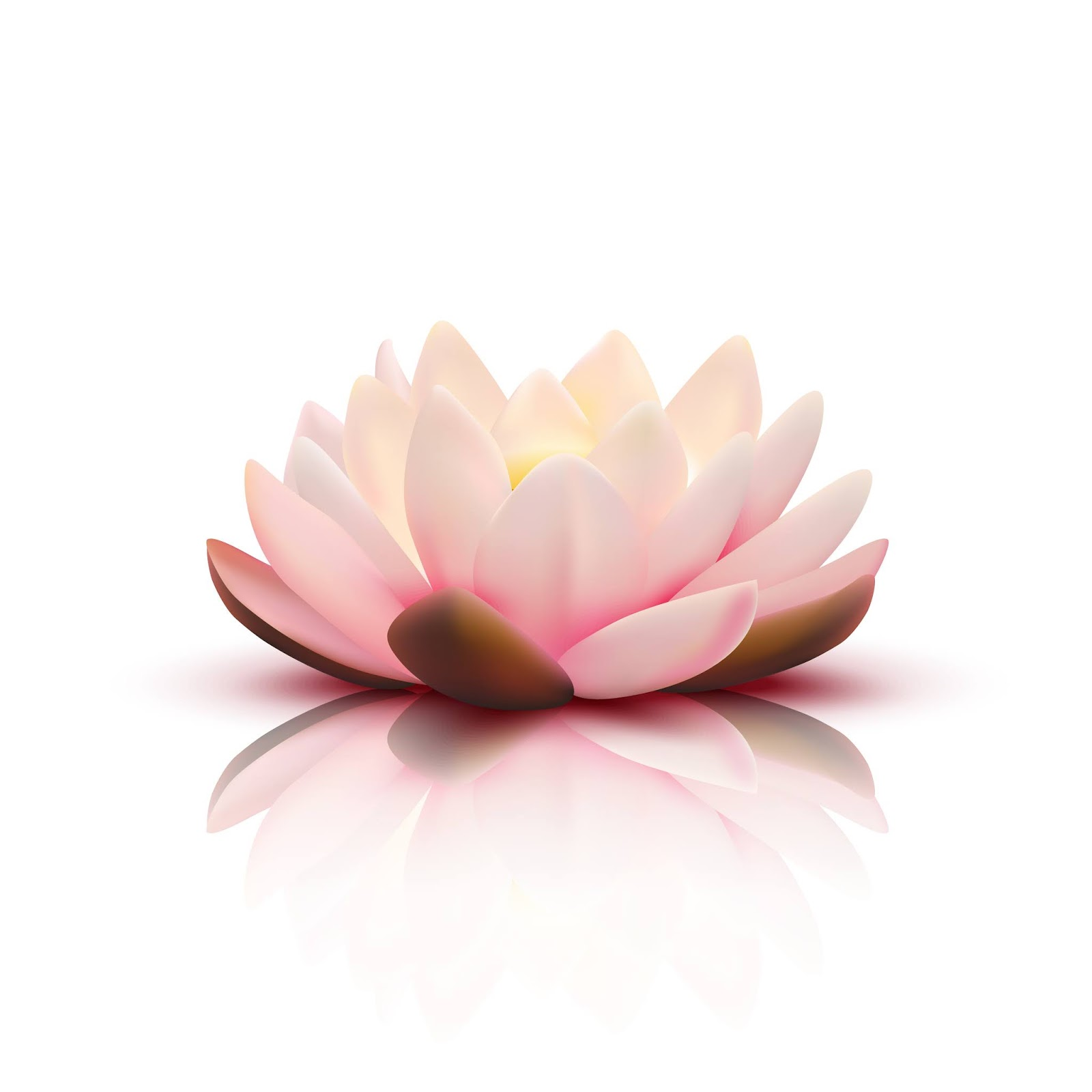 Isolated Flower Lotus With Light Pink Petals With Reflection Free Download Vector CDR, AI, EPS and PNG Formats