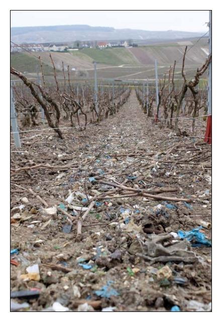 [vinice-odpad%5B3%5D]