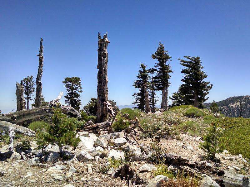 Ontario Peak and Bighorn Peak • Bighorn Peak