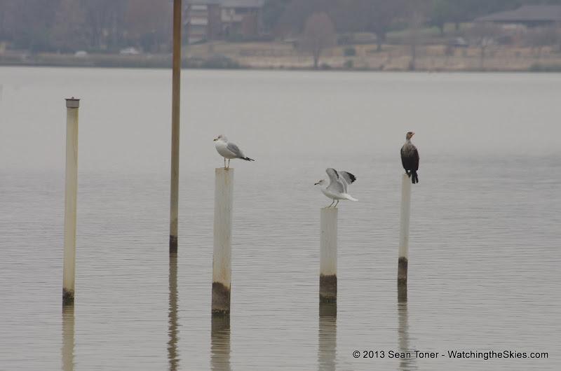 01-26-13 White Rock Lake - IMGP4377.JPG