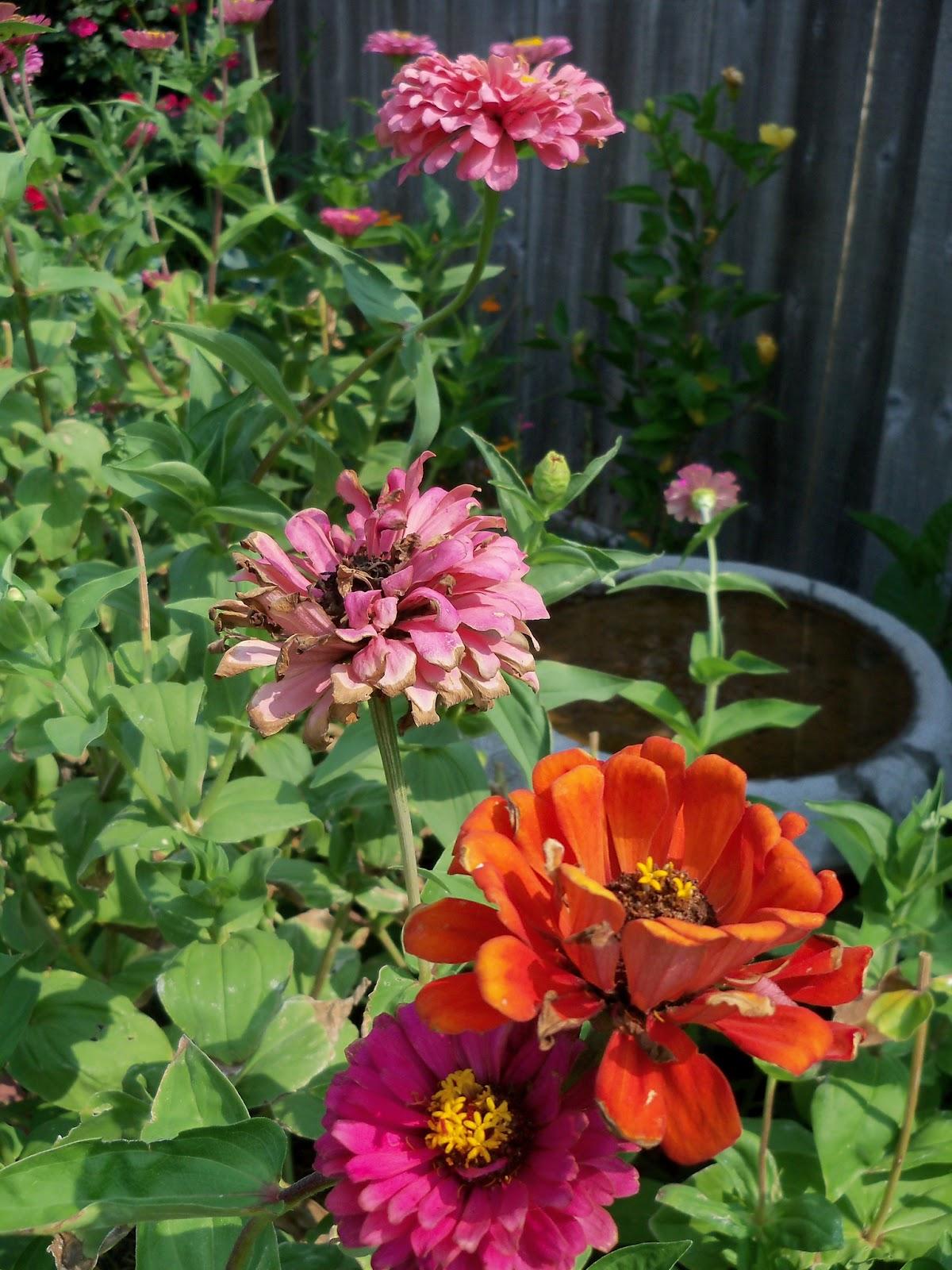 Gardening 2011 - 100_9373.JPG