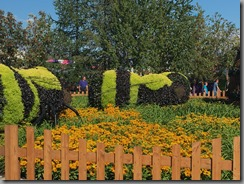 Plantings of bees in the middle of the fair