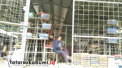 Peternakan Ayam yang diduga tidak memiliki Izin / Foto : Rapik Utama