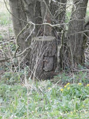 das gutgemachte finale Doserl des Multi U(h)rwald