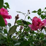 Gardening 2014 - 116_1829.JPG