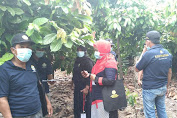Tingkatkan Pengetahuan Pengendalian Hama dan Peyakit Kakao, Petani di Luwu Ikuti Pelatihan Berbasis Lingkungan
