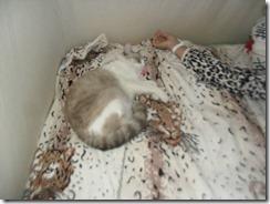 mimosa-na-cama-ambientada