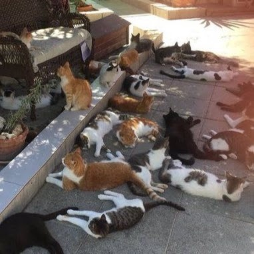 картинки для заставки в вконтакте
