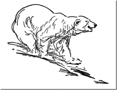 polar-bear-3-coloring-page