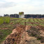 Помощь Воронежским лесам 005.jpg