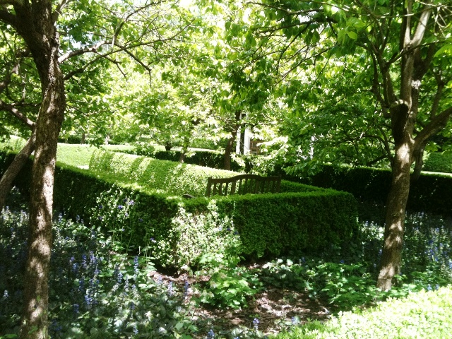 external image Hedging-and-plants-in-dappled-shade-of-deciduous-trees.jpg