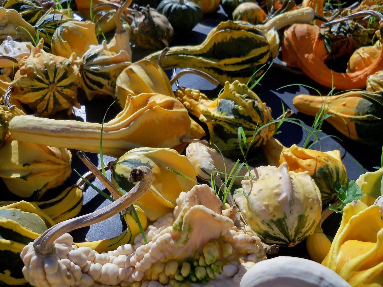 Pumpkin Patch 2014 - 116_4414.JPG