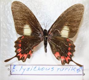 E. KYSITHOUS RURIK.JPG