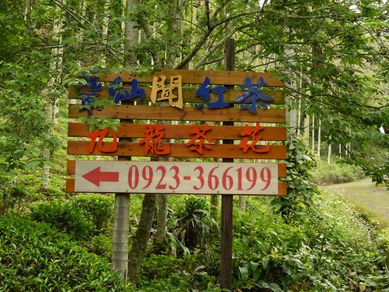 Puli, Nantou county, cueillette de thé - P1050558.JPG