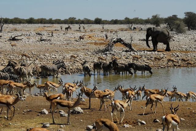 أفضل ما في أفريقيا  Best of Africa Namibia_180807120227