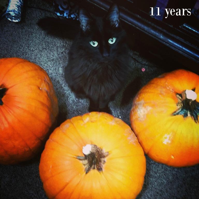 [last-halloween2]