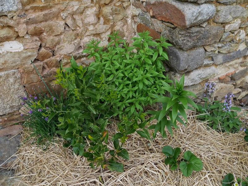Un jardin en formation P1020906