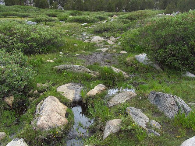 trail across marsh