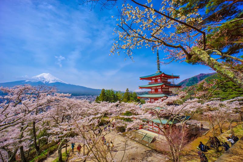 新倉富士浅間神社 桜 富士山 写真7