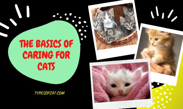 The Basics Of Caring For Cats