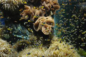 A sea of Nemos