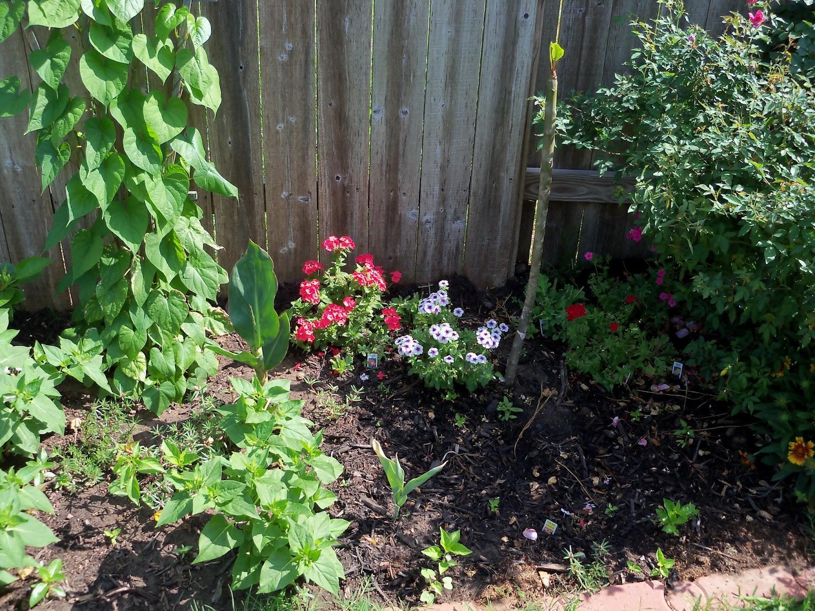 Gardening 2011 - 100_7672.JPG