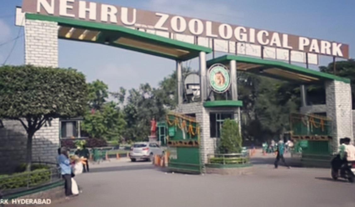 SHOCKING NEWS: ಪ್ರಾಣಿಗಳಿಗೂ ಬರುತ್ತೆ ಕೊರೋನಾ-ಹೈದರಾಬಾದ್ ಝೂನ 8 ಸಿಂಹಗಳಿಗೆ ಕೊರೋನಾ ಪಾಸಿಟಿವ್