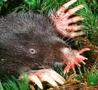 >World's ugliest animals   Daily Beeper