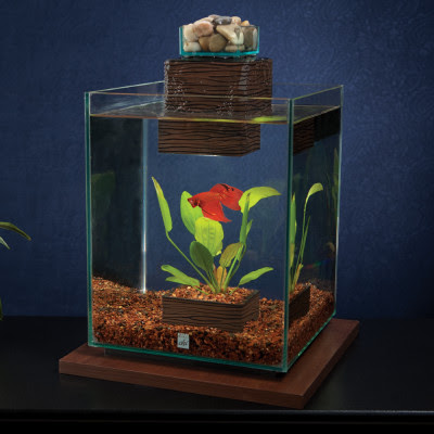 Win a fluval chi fish tank from petsmart oh so cynthia for Fish tanks petsmart