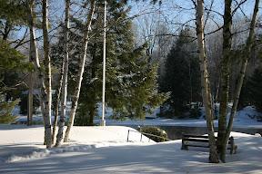 Birch trees along Gull River