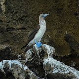 galapagos - Galapagos_FB-141.jpg