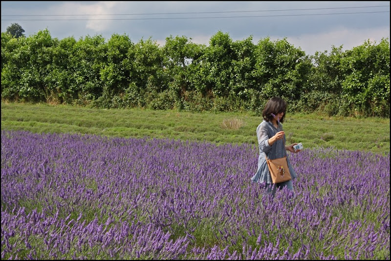 Lone lady at Castle Farm Lavender - The Hop Shop