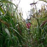 Refugi de Bellmunt 2005 - CIMG4667.jpg