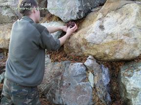 idée : végétalisation de rocaille en sphaigne