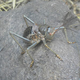 A HUGE bug seen on the hike