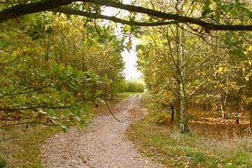 Shenley Wood.jpg