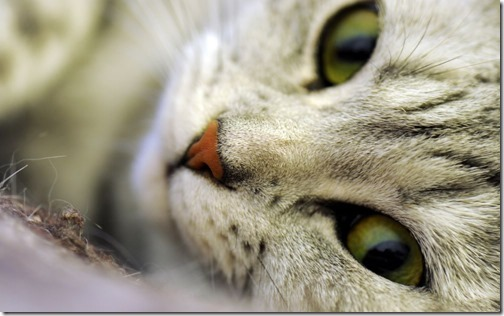 fotos de gatos (20)