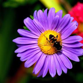by Iztok Urh - Flowers Flowers in the Wild (  )