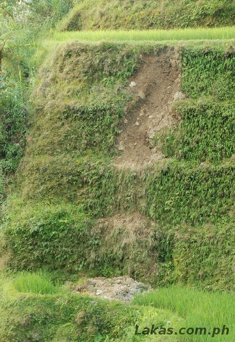 Eroded Soil in Hungduan. This may not be caused by the earthworm
