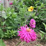 Gardening 2012 - IMG_3873.JPG