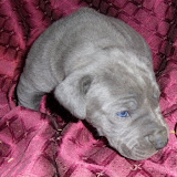 Richter girl @ 3 weeks