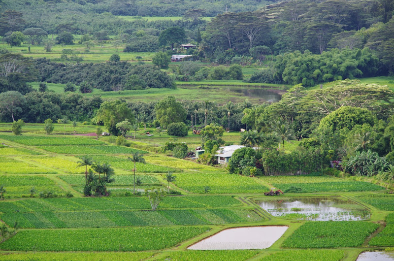 06-26-13 National Tropical Botantial Gardens - IMGP9439.JPG