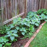 Gardening 2014 - 116_1851.JPG