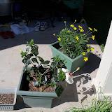 Gardening 2010 - 101_1357.JPG