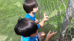 8.7.15 Outdoor Play Gary & Kaliko Gecko Hunting.jpg