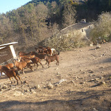Sortida Castellterçol Raiers - P1000269.JPG