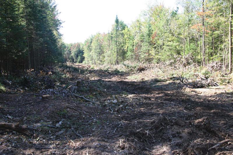 Broyage écologique - parc_industriel_1_20130124_2032017883.jpg