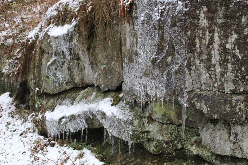 01. Januar 2016: Neujahrswanderung ins Waldnaabtal - IMG_1518.JPG