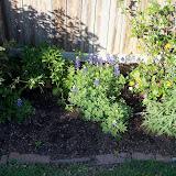 Gardening 2013 - 115_5363.JPG